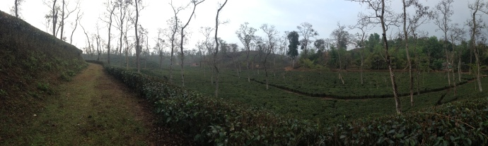 the panoramic view of the tea gardens of Sylhet