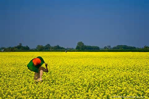 The Meadows of Bangladesh (Photo courtesy of wallpapersworldbd.com)